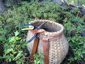 tea picking at Pennask Lake